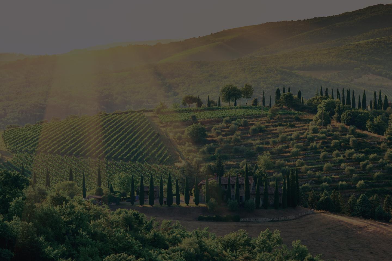 A la découverte des Super Toscans du Domaine Batzella