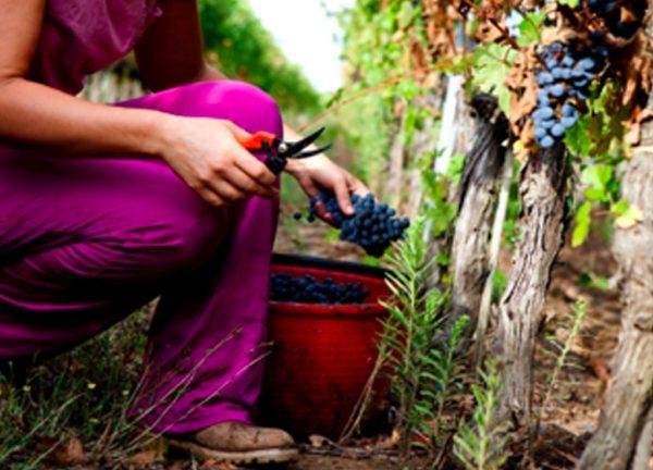 vigneti-batzella-winery-3.jpg