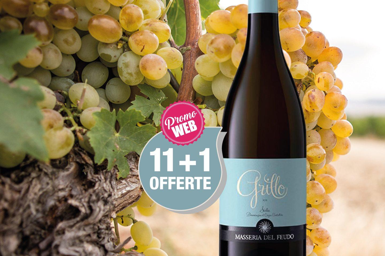 Offre Spéciale Web : Italie DOC Sicilia 2019 Grillo Masseria del Feudo / Bio