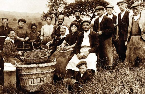 1912-la-premiere-vendange-d-henri-lhopital-fondateur-de-la-maison.jpg