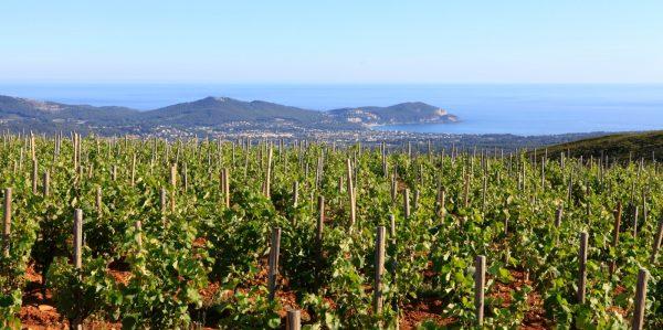 un-vignoble-en-bord-de-mediterranee-1.jpg