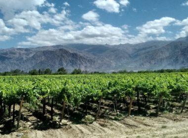 vignoble-argentin-380x280.jpeg